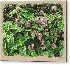 Acrylic Print featuring the photograph In The Highline Garden by Joan  Minchak