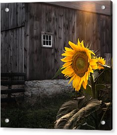 In The Light Acrylic Print by Bill Wakeley
