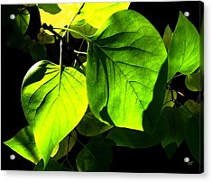 In The Limelight Acrylic Print by Will Borden