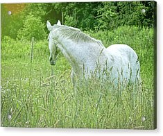 In The Meadow Acrylic Print by JAMART Photography