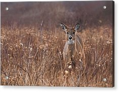 Acrylic Print featuring the photograph In The Meadow by Robin-Lee Vieira