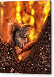 In The Middle Acrylic Print by Bob Orsillo
