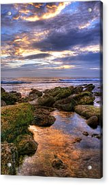In The Morning Acrylic Print by Svetlana Sewell