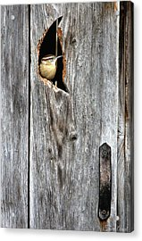 In The Outhouse Shed Acrylic Print
