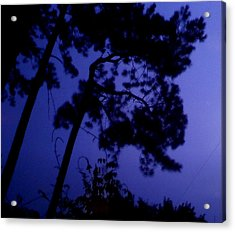 In The Pines Acrylic Print by Leslie Revels
