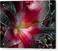 In The Pink Acrylic Print by Stuart Turnbull