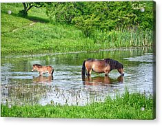 In The Puddle 1 Acrylic Print
