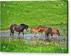 In The Puddle 2 Acrylic Print
