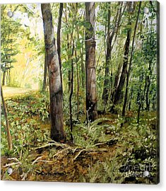 In The Shaded Forest  Acrylic Print