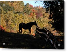 In The Shadow Acrylic Print by William A Lopez