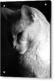 In The Shadows Acrylic Print by Bob Orsillo