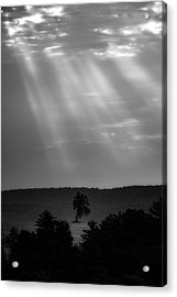 Acrylic Print featuring the photograph In The Spotlight by Bill Wakeley