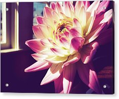 In The Sunshine Acrylic Print by JAMART Photography