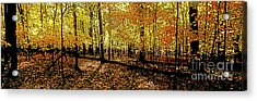 In The The Woods, Fall  Acrylic Print
