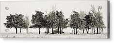 Acrylic Print featuring the photograph In The Tree Line by Don Durfee