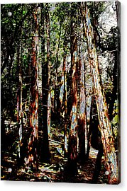 In The Trees Acrylic Print by Tim Tanis