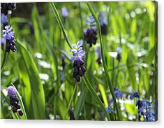 In The Wild Acrylic Print by Connie Handscomb