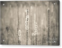 In The Wild Grass Acrylic Print