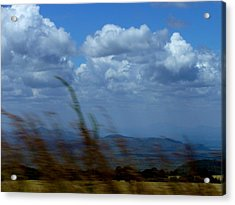 In The Wind Acrylic Print by Carole Guillen