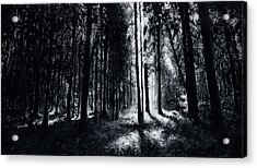 In The Woods 6 Acrylic Print