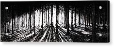 In The Woods 2 Acrylic Print