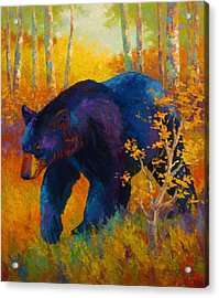 In To Spring - Black Bear Acrylic Print by Marion Rose