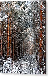 In To The Light Acrylic Print by Svetlana Sewell