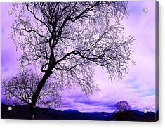 In Touch Acrylic Print by HweeYen Ong