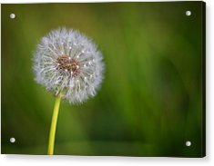 Acrylic Print featuring the photograph In Your Own Time by Tim Nichols