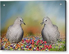 Inca Doves Acrylic Print by Bonnie Barry