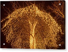Incandescent Branches  Acrylic Print