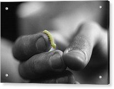 Inchworm Acrylic Print