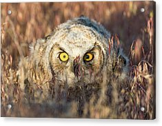 Incognito Acrylic Print by Scott Warner