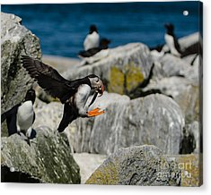 Incoming Acrylic Print by Paul Noble