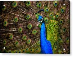 India Blue Acrylic Print
