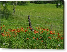 Indian Blanket Fence Acrylic Print by Robyn Stacey