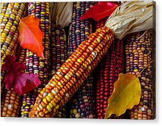 Indian Corn And Autumn Leaves Acrylic Print