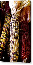 Indian Corn Acrylic Print by Sonja Anderson