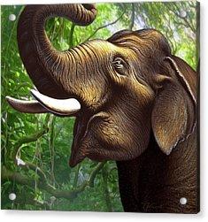 Indian Elephant 1 Acrylic Print by Jerry LoFaro