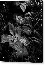 Acrylic Print featuring the photograph Indian Hellebore 6 by Trever Miller