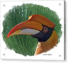Indian Hornbill Acrylic Print by Larry Linton