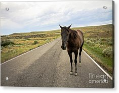 Acrylic Print featuring the photograph Indian Horse by Sandy Adams