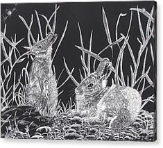 Acrylic Print featuring the mixed media Indian Ink Rabbits by Kevin F Heuman