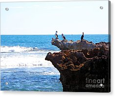 Indian Ocean Birds Resting On Rocks Acrylic Print