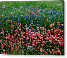 Acrylic Print featuring the photograph Indian Paintbrush #0486 by Barbara Tristan