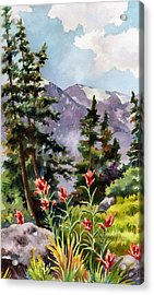 Indian Paintbrush Acrylic Print
