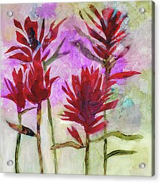 Indian Paintbrush Acrylic Print by Julie Maas