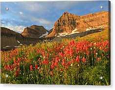 Indian Paintbrush On Timpanogos. Acrylic Print