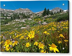 Acrylic Print featuring the photograph Indian Peaks Summer Wildflowers by Cascade Colors