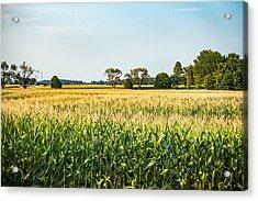 Indiana Corn Field Acrylic Print